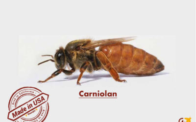 Carniolan honey bees
