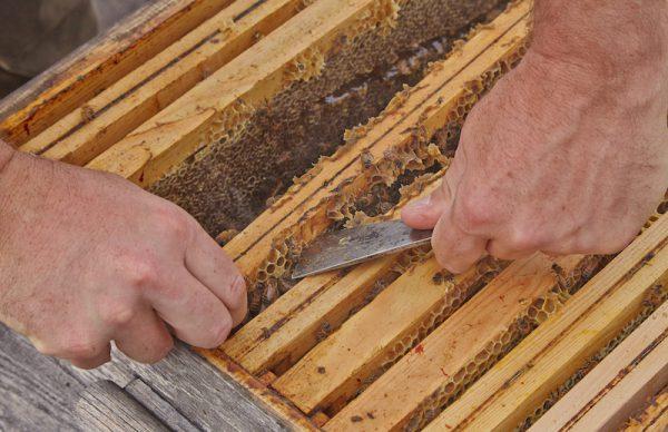 hive-tool-beekeeping