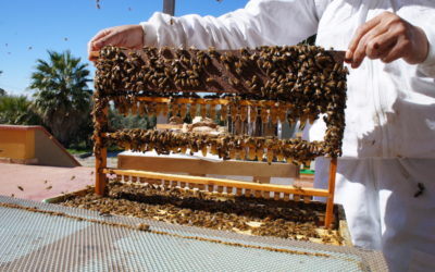 Order and shipping Queens bees