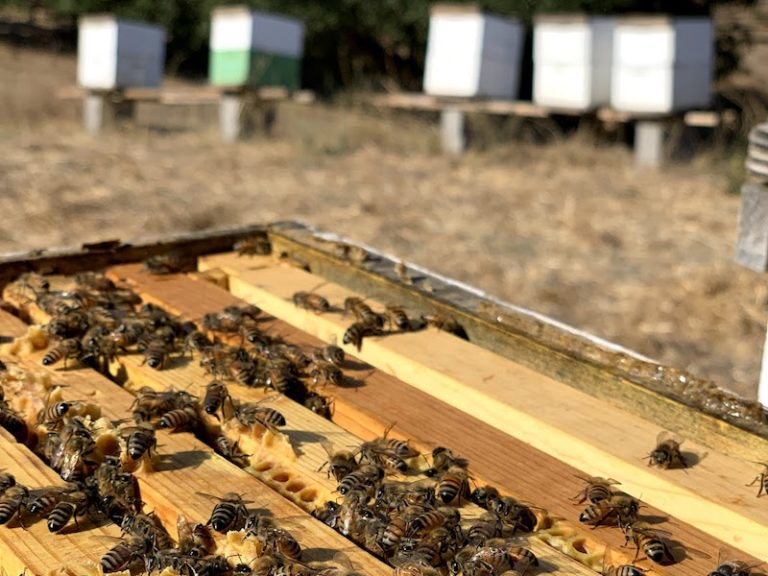 Honey bees nucs for sale
