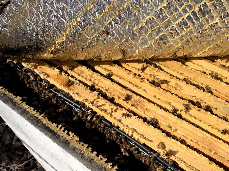 At what temperature is it safe to open a beehive?