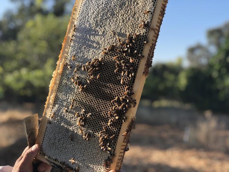 Local honey from El Sobrante, CA 94803